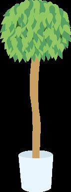 160cm程度の植物