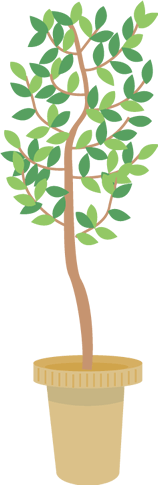 200cm以上の植物