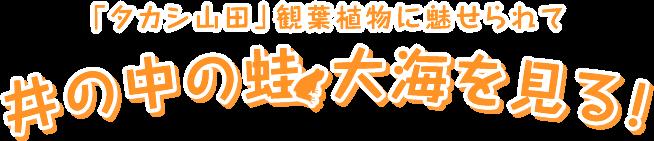 「タカシ山田」観葉植物に魅せられて 井の中の蛙 大海を見る!