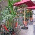 ケンチャヤシ、下草:トラフアナナス